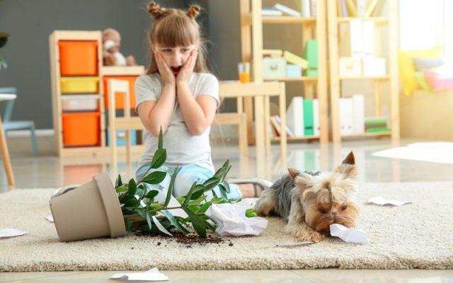 spilled-plant-dog